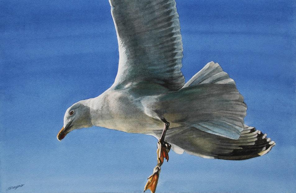 Painting 99-Seagull-Freda Surgenor